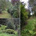Uprava zanedbane zahrady 1.jaroslav kysilko puvodni stav