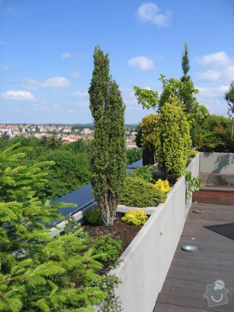 Revitalizace a následná pravidelná péče o střešní zahradu. : IMG_8544