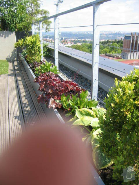 Revitalizace a následná pravidelná péče o střešní zahradu. : IMG_8548