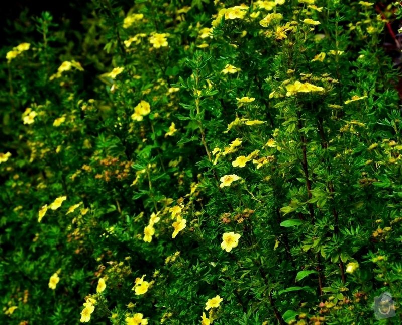 Pravidelná údržba zahrady: upravenaDSC_0164
