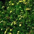 Pravidelna udrzba zahrady upravenadsc 0164