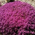 Pravidelna udrzba zahrady upravena wp 000834