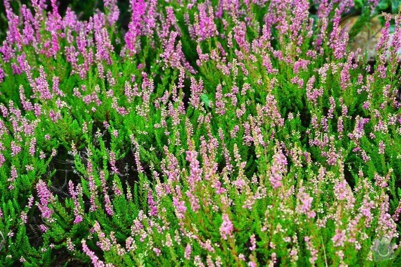 Pravidelná údržba zahrady: upravenaDSC_0126