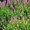 Pravidelna udrzba zahrady upravenadsc 0126