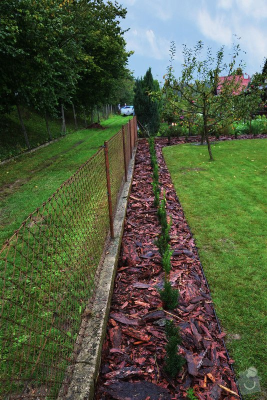 Trávník, šlapáková cesta, živý plot: uDSC_0721