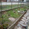 Oprava plotu puvodni plot