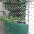 Vchodovou branku vrata branka1
