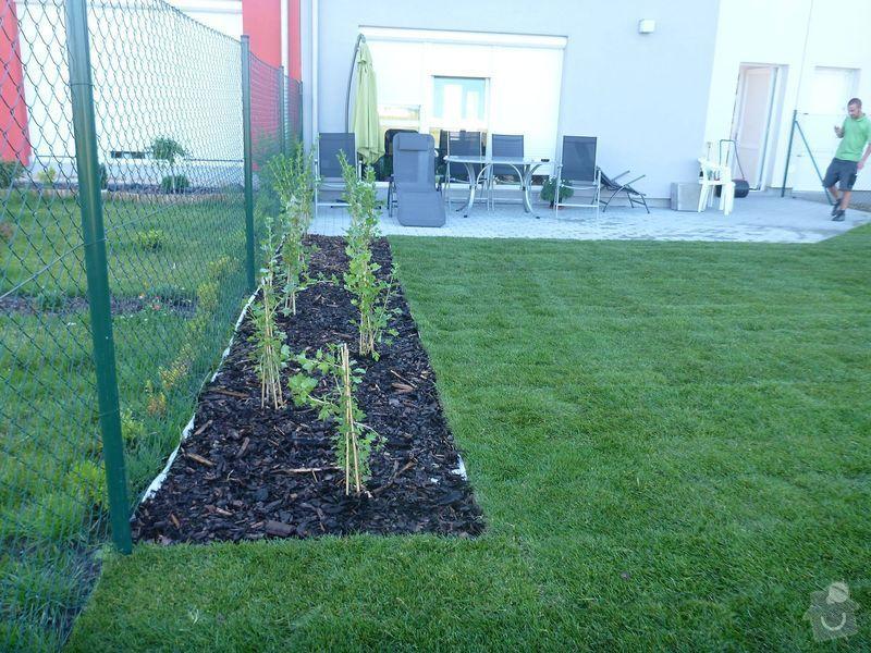 Realizace jednoduché zahrady: P1020610
