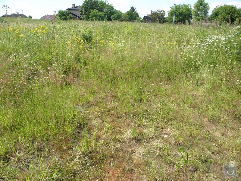 Posekání zahrady: P7080282