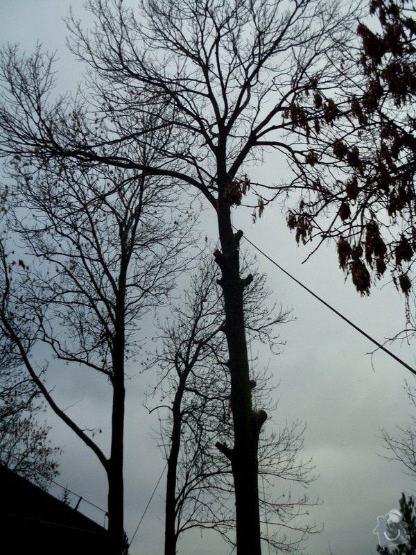 Kácení stromů: IMG_0585