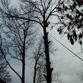 Kaceni stromu img 0585