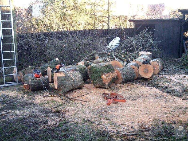 Kácení stromů: IMG_0599