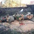 Kaceni stromu img 0599