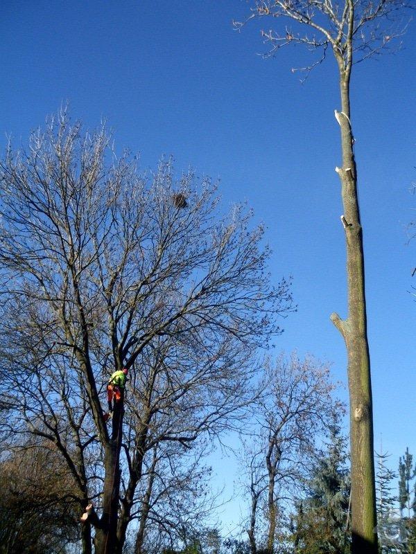 Kácení stromů: IMG_0610