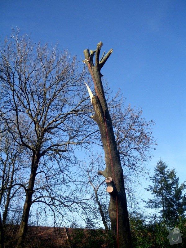 Kácení stromů: IMG_0622