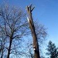 Kaceni stromu img 0622