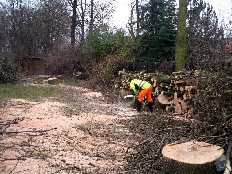Kácení stromů: IMG_0678
