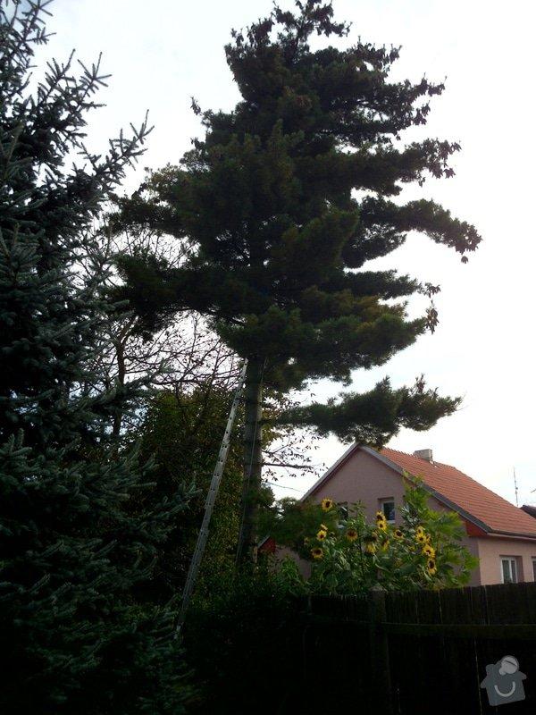 Pokácení stromů na vlastním pozemku: IMG_0277
