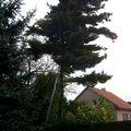 Pokaceni stromu na vlastnim pozemku img 0277