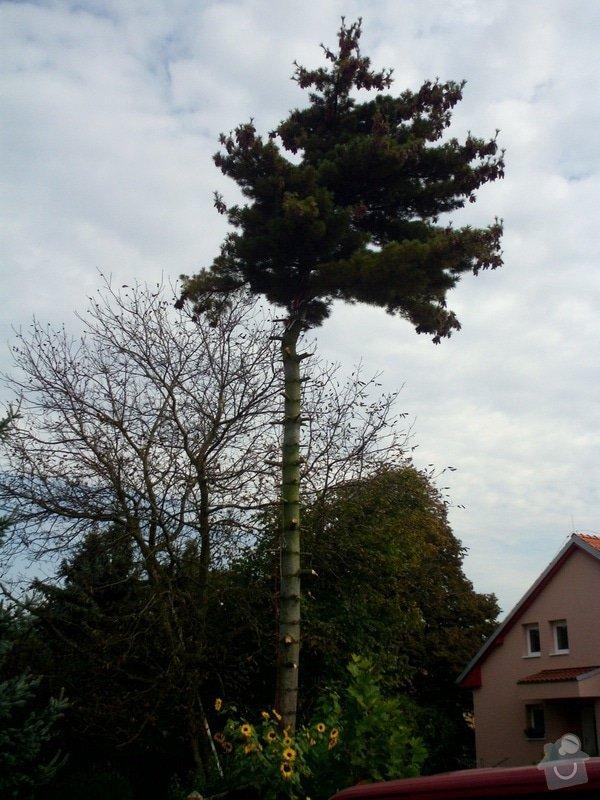 Pokácení stromů na vlastním pozemku: IMG_0281