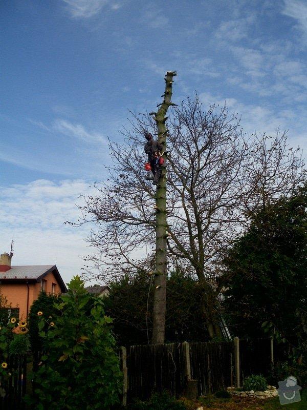 Pokácení stromů na vlastním pozemku: IMG_0296