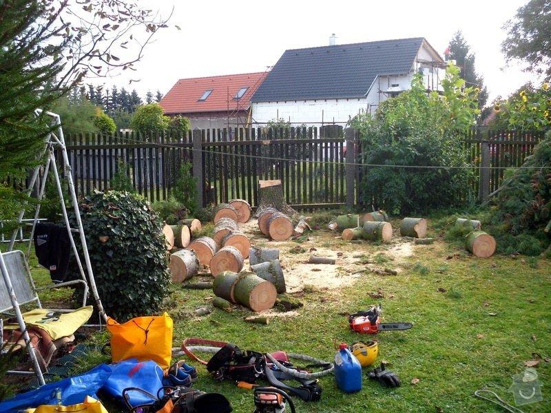 Pokácení stromů na vlastním pozemku: IMG_0302