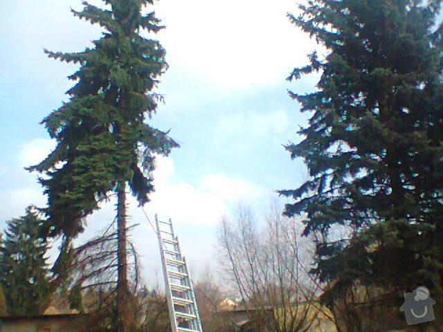 Rizikové kácení stromů: Fotografie1415
