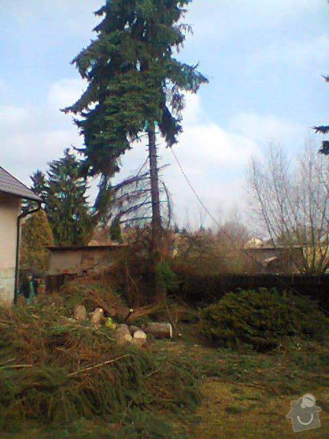Rizikové kácení stromů: Fotografie1416