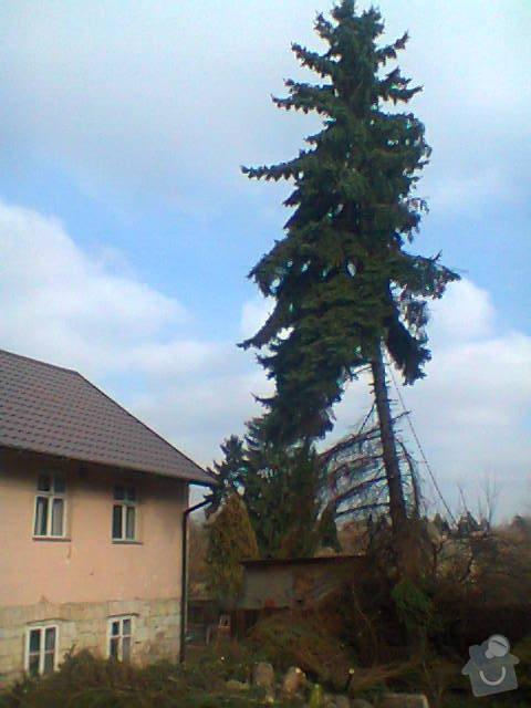 Rizikové kácení stromů: Fotografie1417