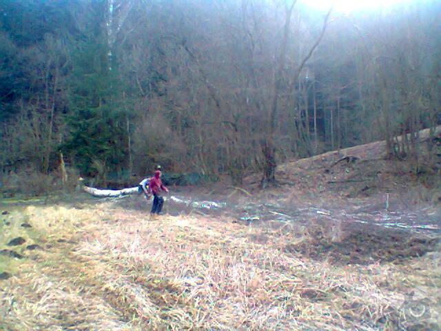 Pokácení vzrostlé břízy u chaty: Fotografie1405