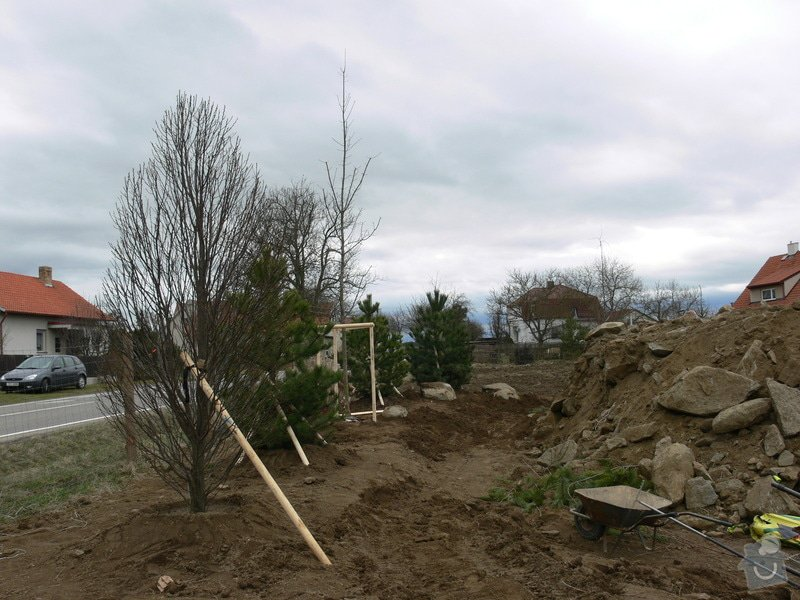 Zakladaní zahrady, vysadba vzrostlych stromu: P1490385