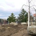 Zakladani zahrady vysadba vzrostlych stromu p1490370
