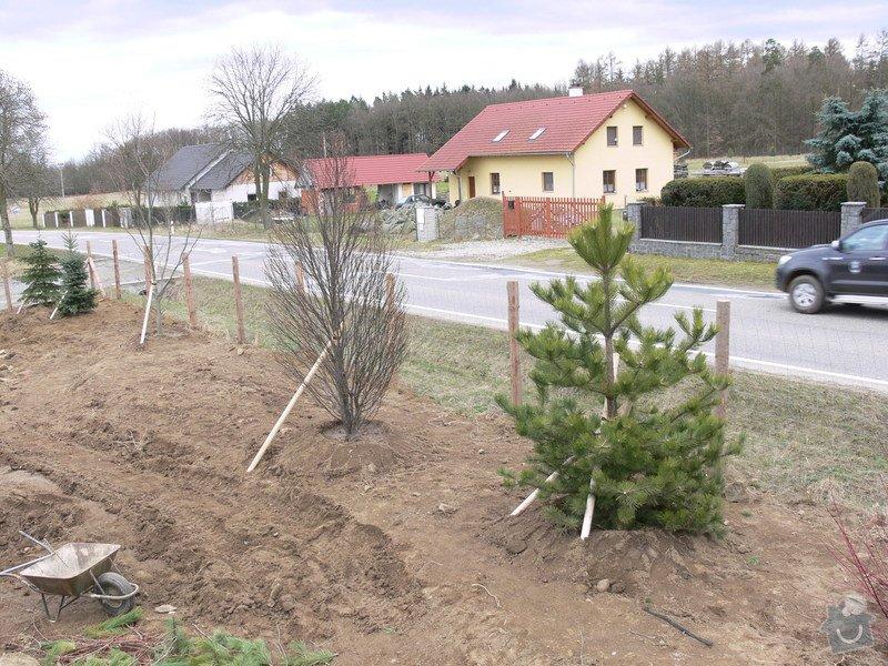 Zakladaní zahrady, vysadba vzrostlych stromu: P1490375