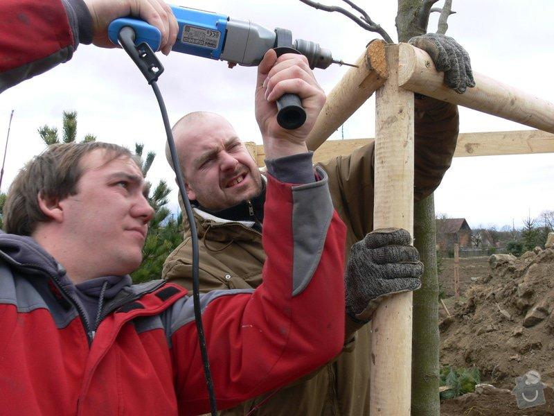 Zakladaní zahrady, vysadba vzrostlych stromu: P1490339