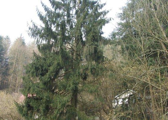 Kácení stromu pomocí horolezecké techniky