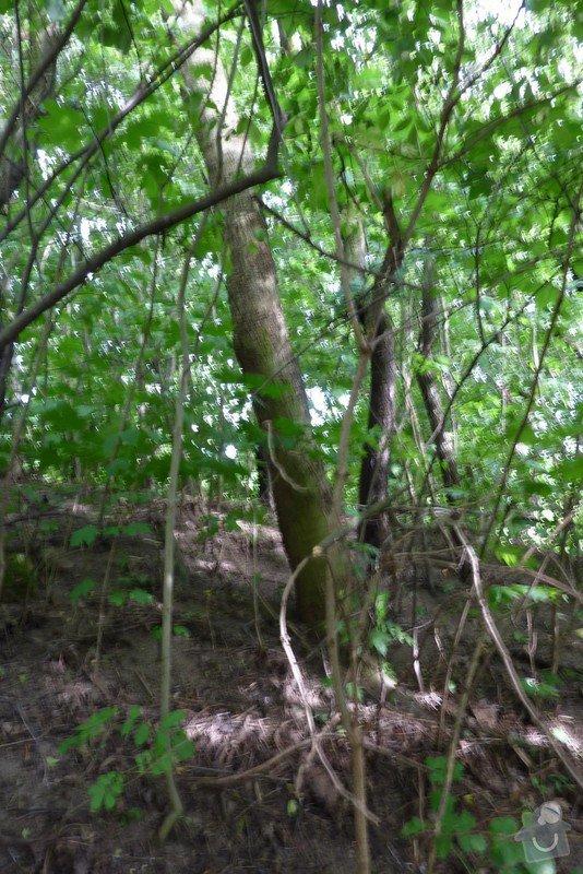 Pokácení stromu: strom_003
