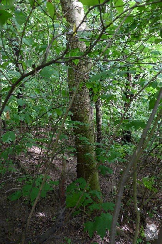 Pokácení stromu: strom_005