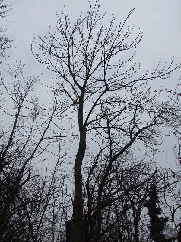 Kácení stromu pomocí horolezecké techniky: Kavci_hory_004