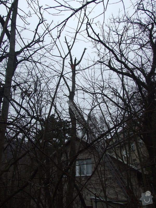 Kácení stromu pomocí horolezecké techniky: Kavci_hory_006