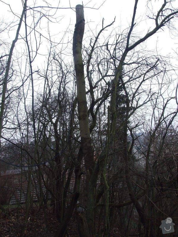 Kácení stromu pomocí horolezecké techniky: Kavci_hory_008