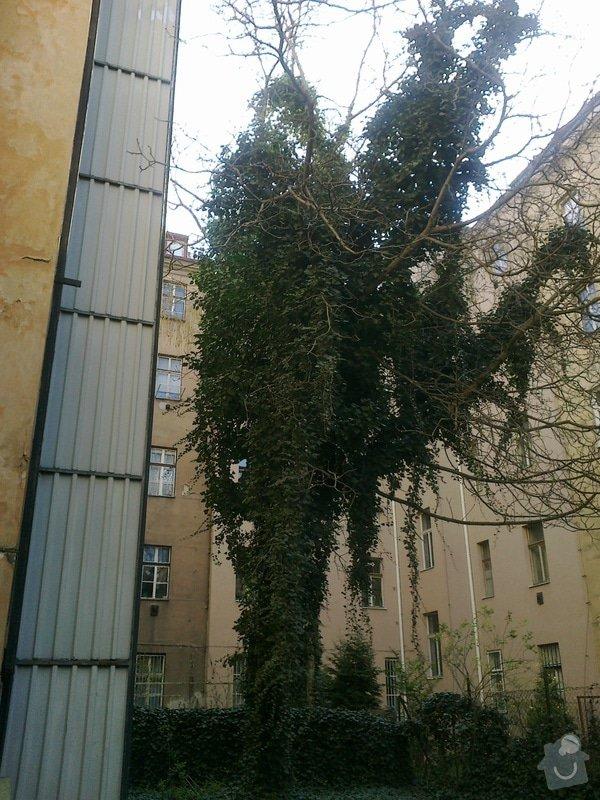 Prořezání stromu: 27032014880