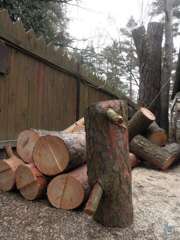 Rizikové kácení borovice : P3120095