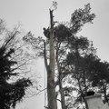 Rizikove kaceni borovice p3120078