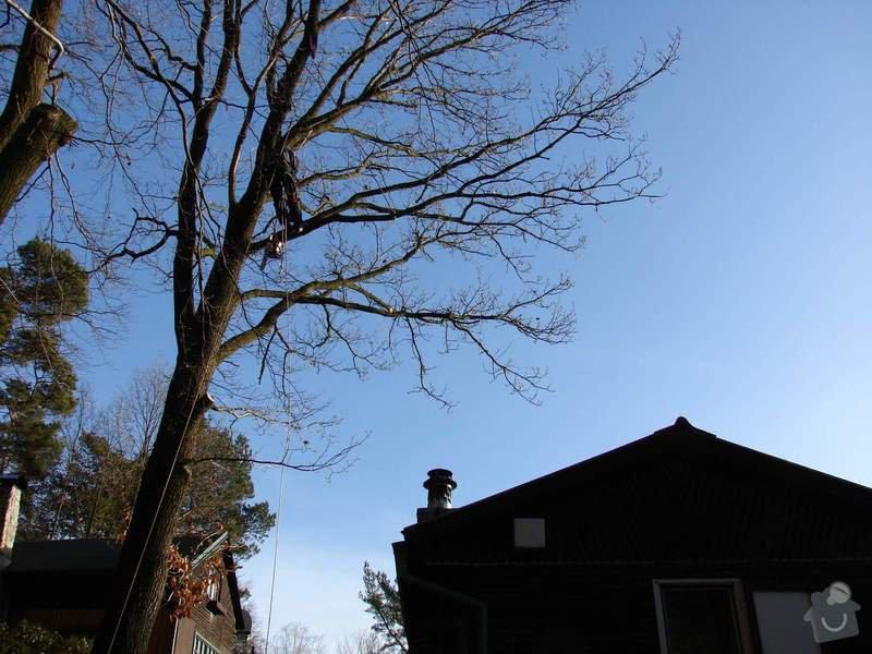 redukční prořez 3 dubů: DSC03471