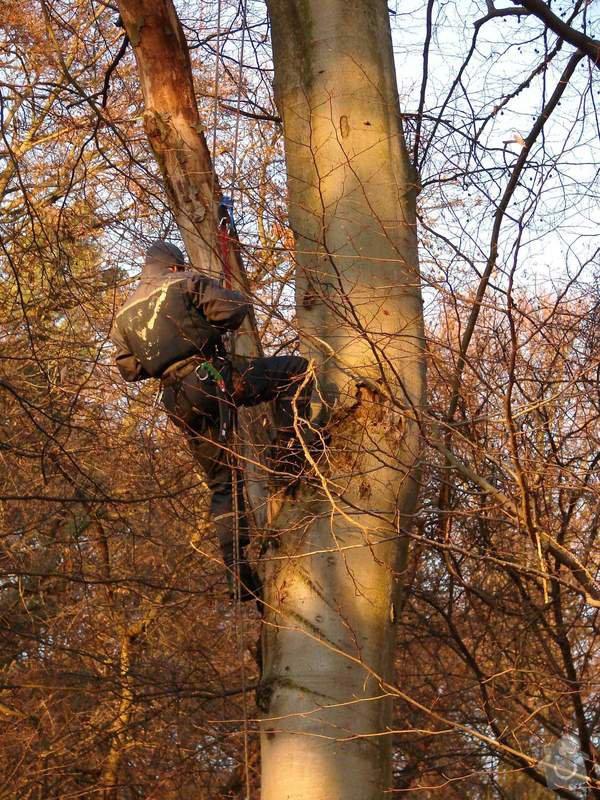 redukční prořez 3 dubů: DSC03478