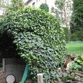 Obloukovitou zahradni pergolu altan 005