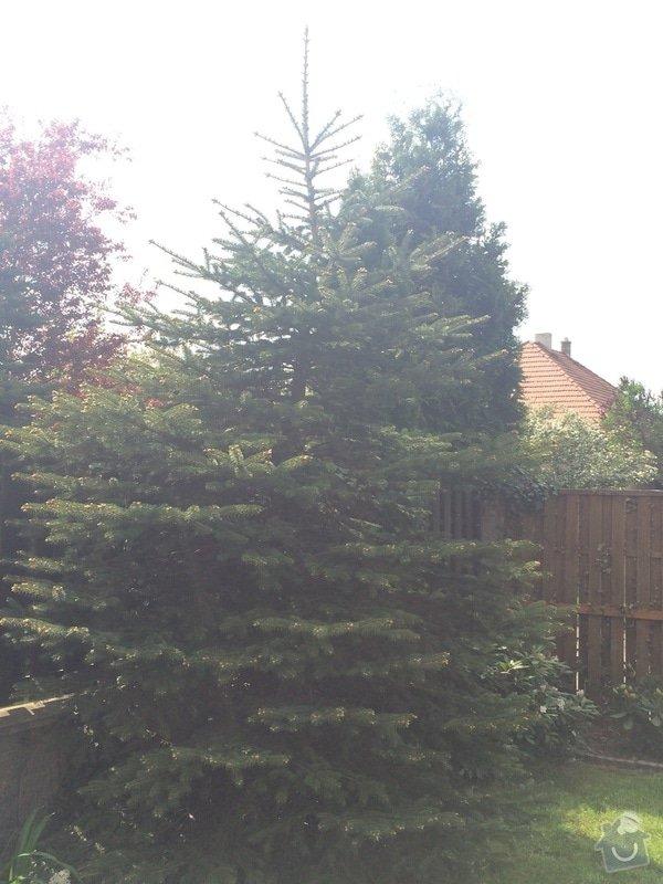 Skaceni stromu, uprava zahrady (bet. chodnik, travnik s rohozi): Strom