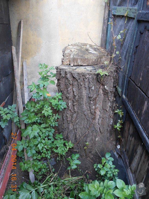 Odstranění pařezu břízy: DSCN0729