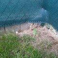 Pokladka dlazby na zahradce 20140427 161903