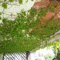 Oprava balkonu 20140427 143937